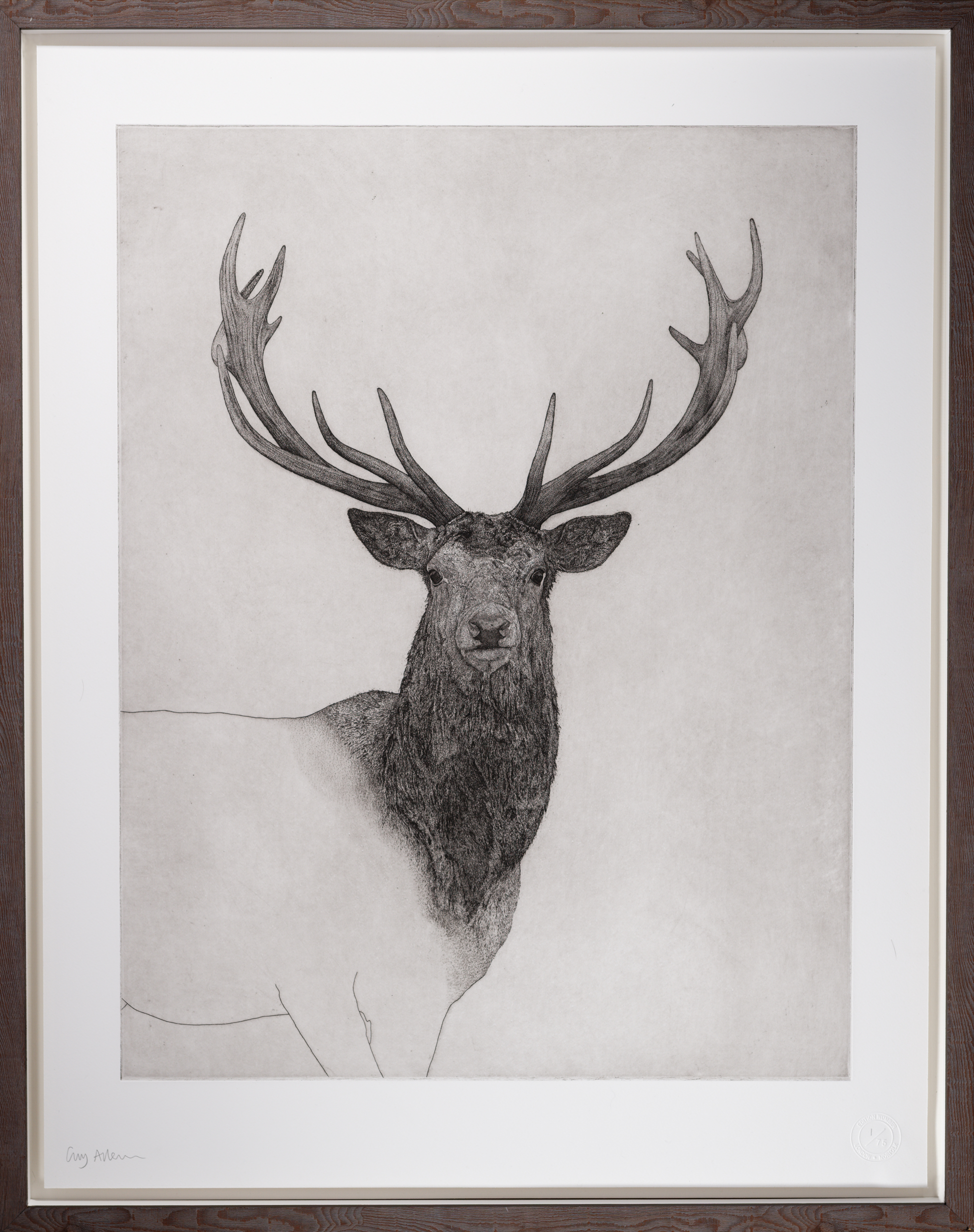 Guy Allen Stag Drawing
